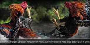 Sabung ayam filiphina